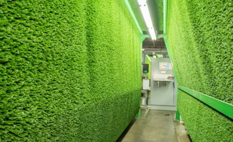The Process of Artificial Grass Manufacturing