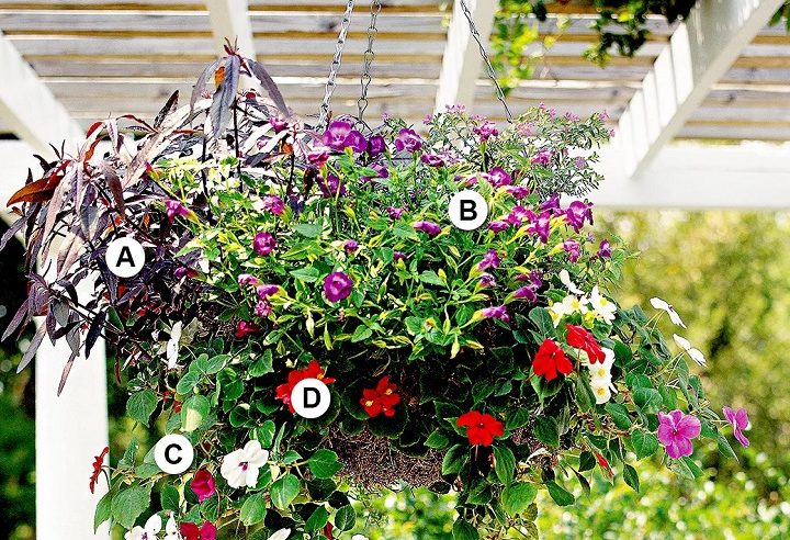 Add a touch of style and charm to outdoor areas with hanging baskets