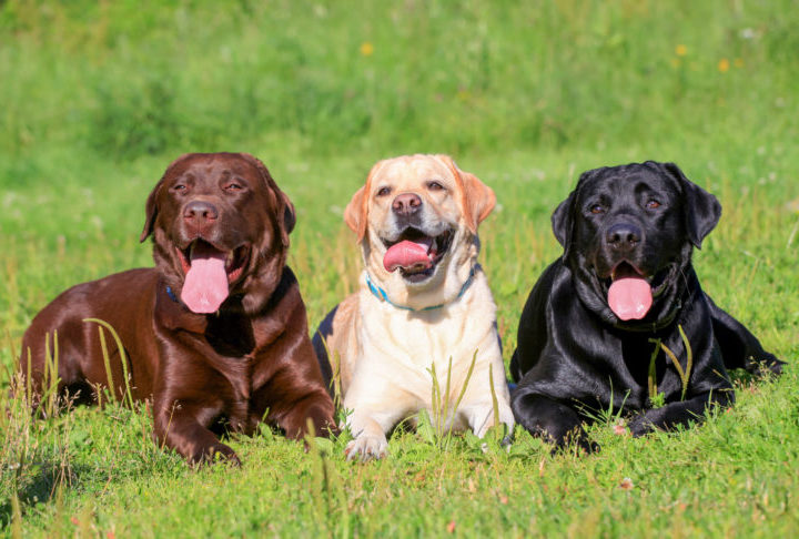 Six things to know before boarding your dog